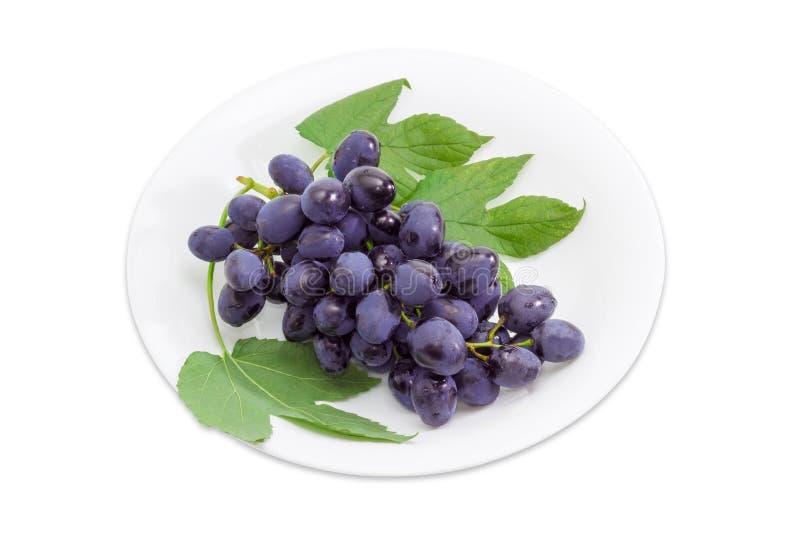 Bos van donkerblauwe druiven op een witte schotel royalty-vrije stock afbeeldingen