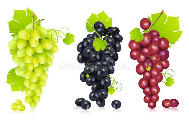Bos van Druiven vector illustratie