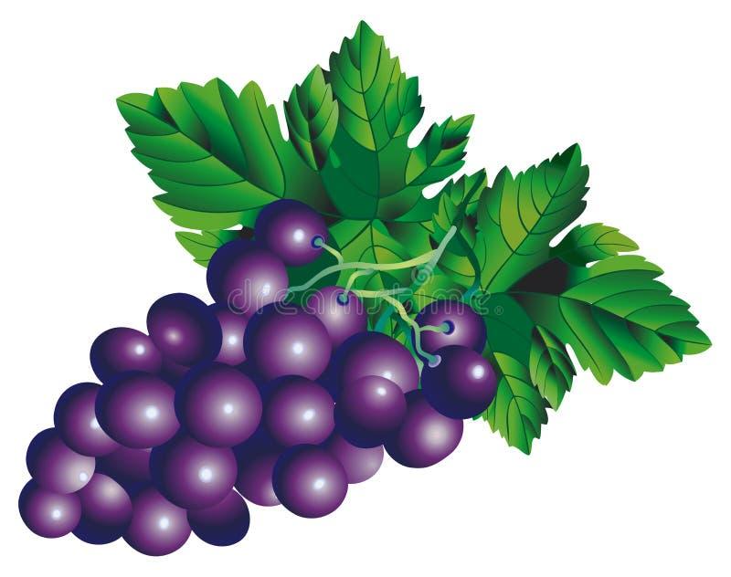 Bos van druiven stock illustratie
