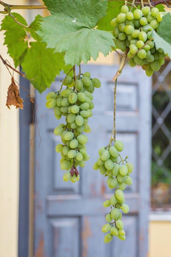 Bos van druiven met groene wijnstokbladeren in mand royalty-vrije stock afbeeldingen