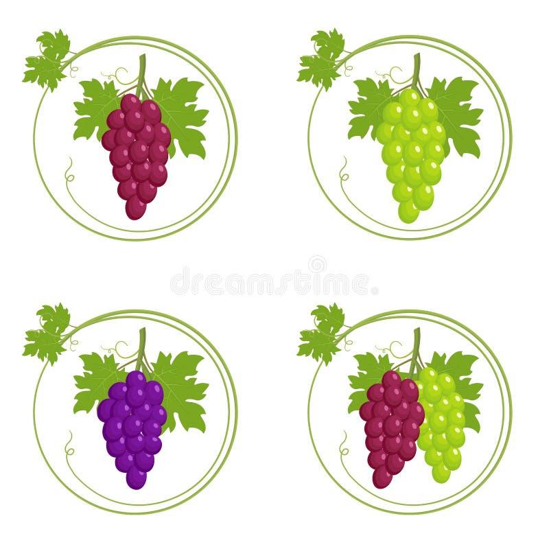 Bos van druivenreeks vector illustratie