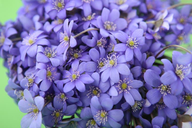 Bos van eerste de lentebloemen stock foto