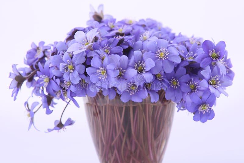 Bos van eerste de lentebloemen stock foto's