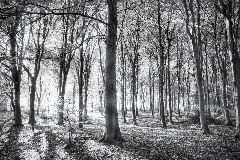 Bos van fluisterende winden stock afbeeldingen