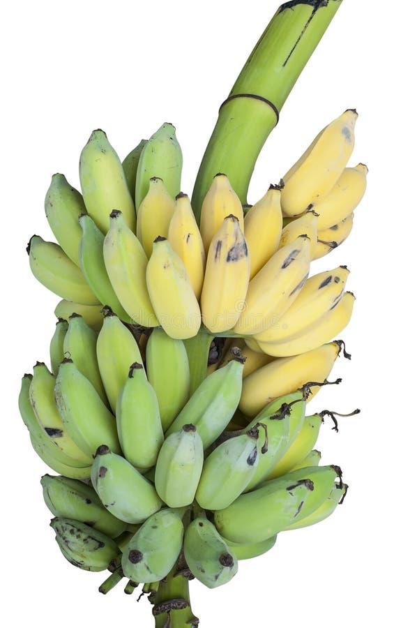 Bos van geïsoleerde bananen. stock fotografie