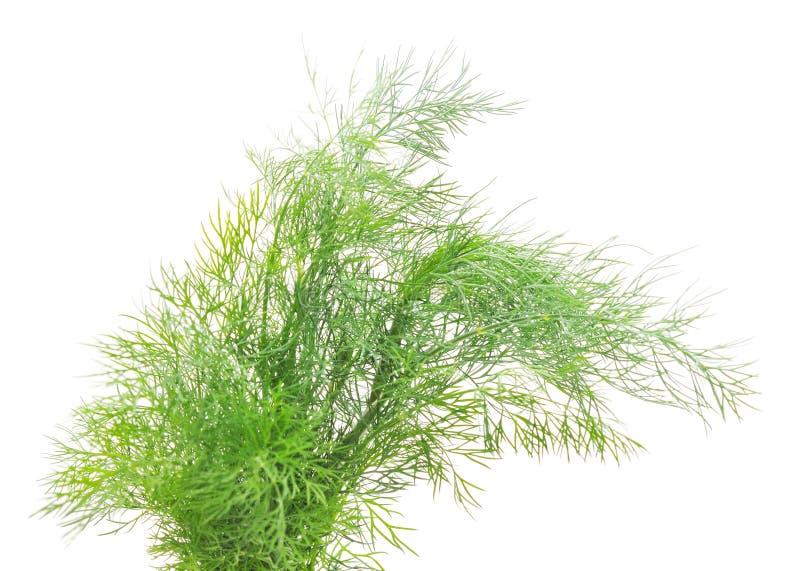 Bos van groene dille stock afbeelding