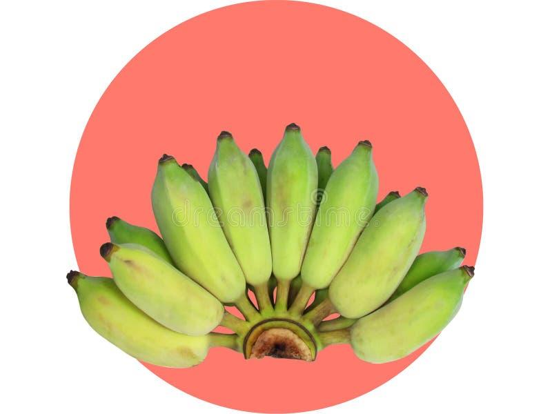 Bos van groene gecultiveerde die banaan op de cirkel van de perzikkleur op witte achtergrond wordt geïsoleerd Knippende weg stock afbeeldingen