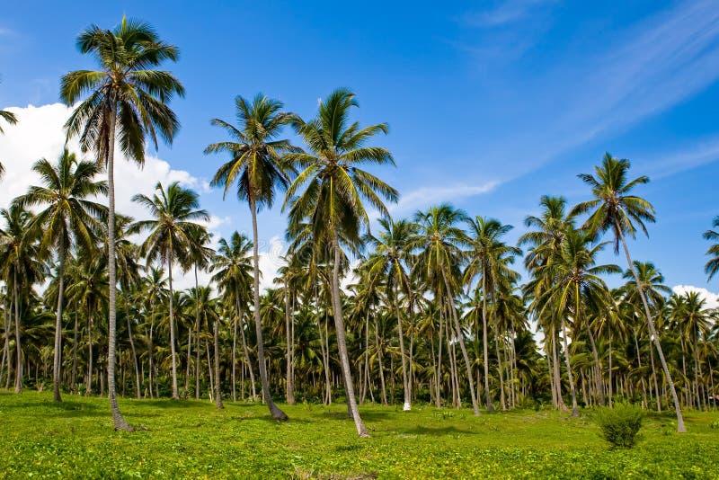Bos van groene palmen onder blauwe hemel stock afbeeldingen