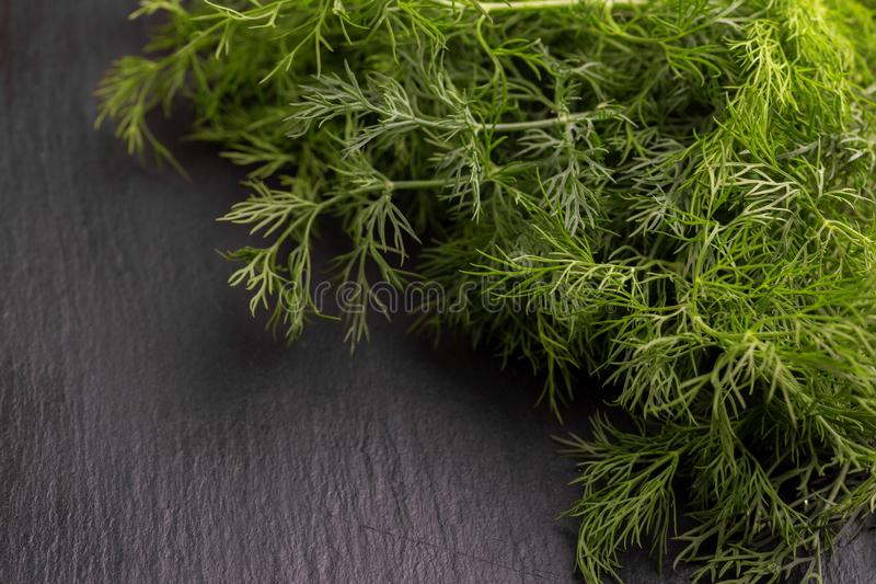 Bos van groene verse organische dille op de grijze leiachtergrond royalty-vrije stock fotografie