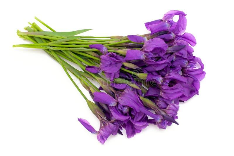 Bos van irisbloemen royalty-vrije stock fotografie