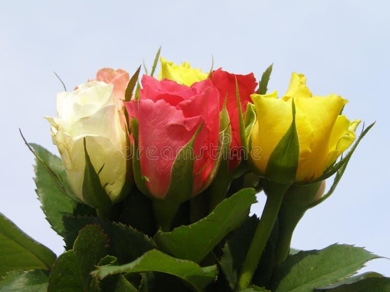 Bos van kleurrijke rozen stock foto