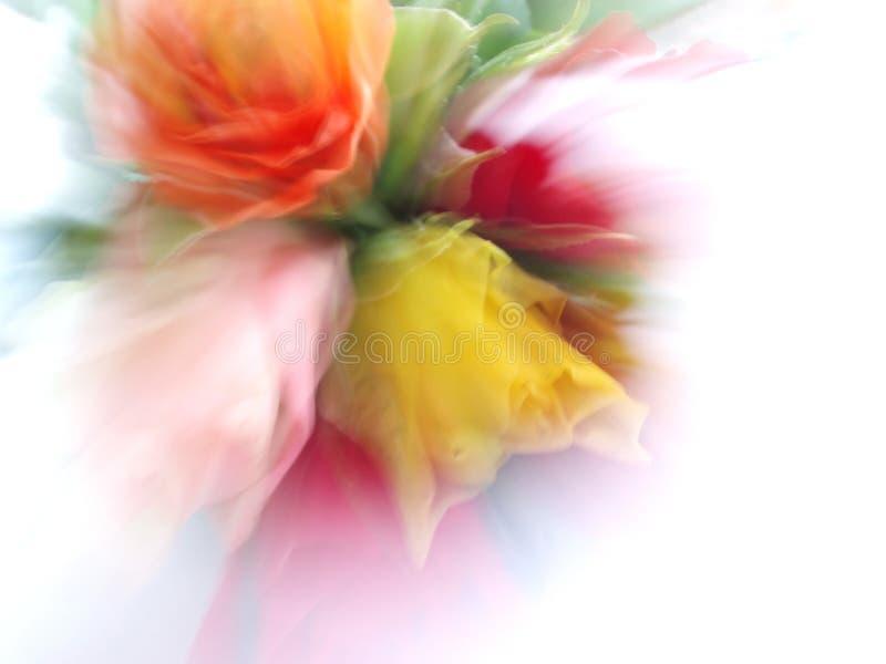 Bos van kleurrijke rozen stock afbeeldingen