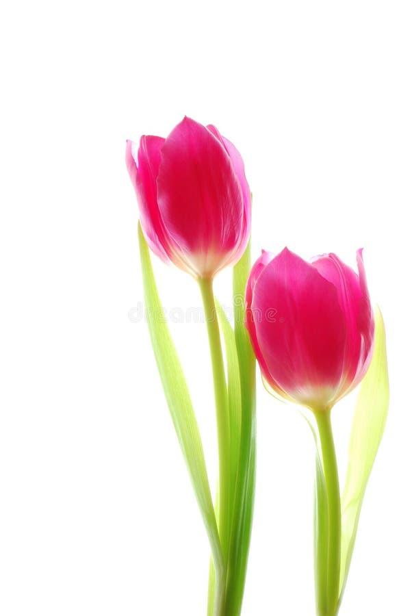 Bos van kleurrijke tulpen royalty-vrije stock afbeeldingen