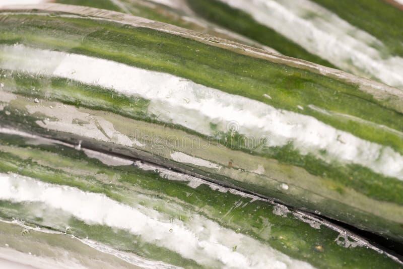 Bos van komkommer in plastic films wordt verpakt die stock fotografie