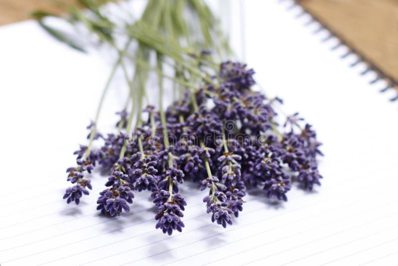 Bos van lavendel royalty-vrije stock afbeeldingen