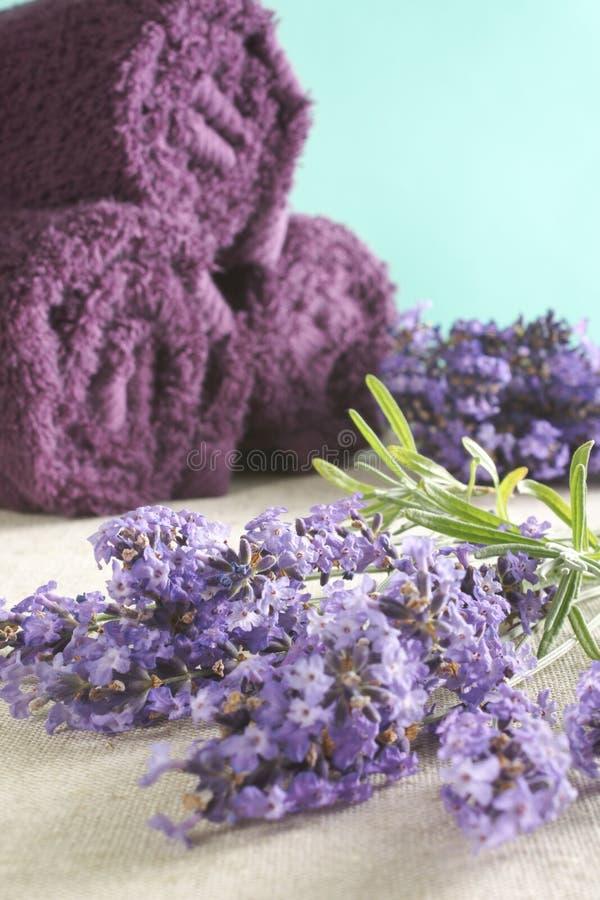 Bos van lavendel stock foto's