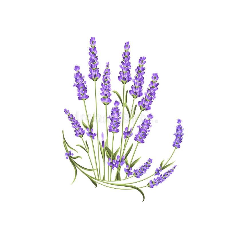 Bos van lavendelbloemen op een witte achtergrond Etiket met lavendelbloemen vector illustratie
