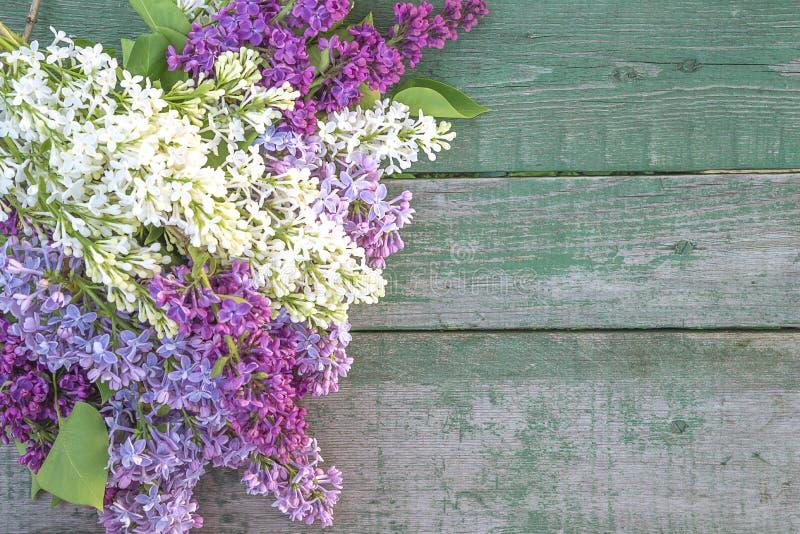 Bos van multicolored sering op oude verf stock afbeeldingen