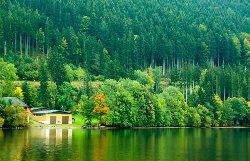 Bos van Pijnboomboom naast het meer royalty-vrije stock fotografie