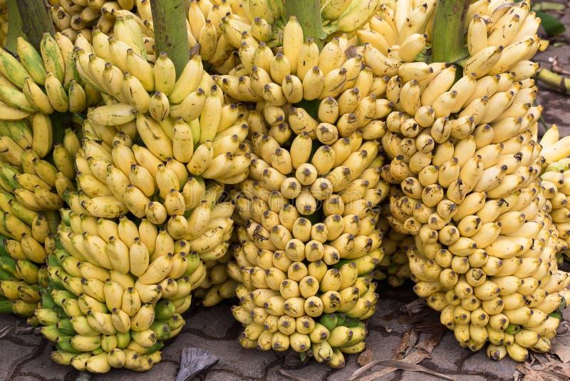 Bos van rijpe bananenachtergrond op de markt royalty-vrije stock foto's