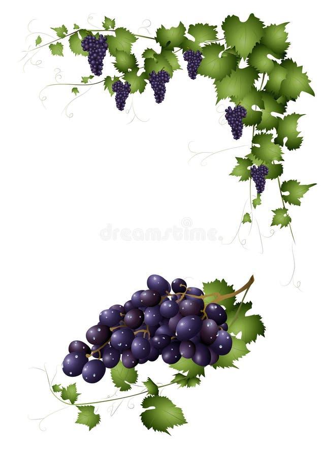 Download Bos van rode druiven vector illustratie. Illustratie bestaande uit vruchten - 39106911