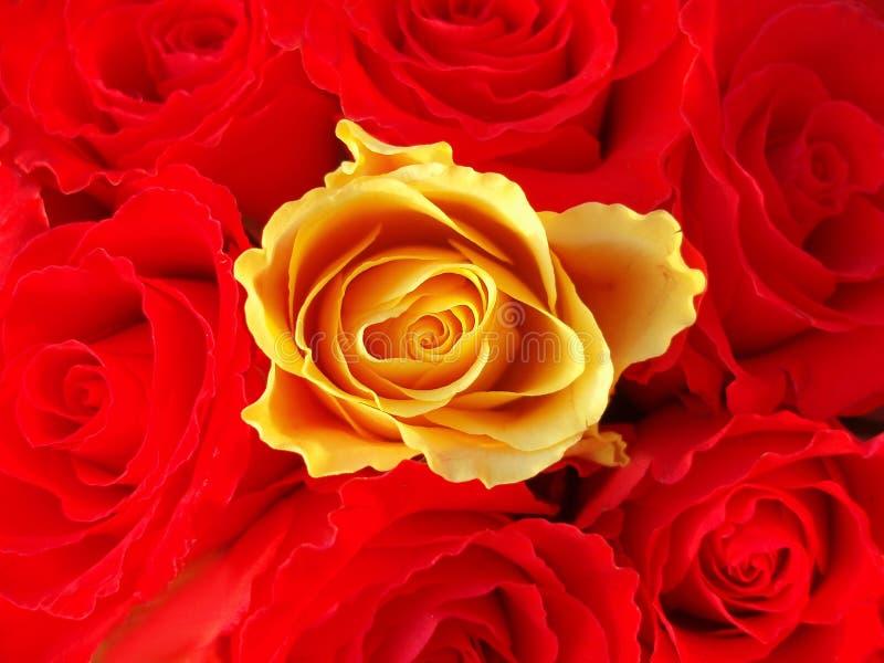 Bos van rode rozen met één enkele gele  royalty-vrije stock fotografie