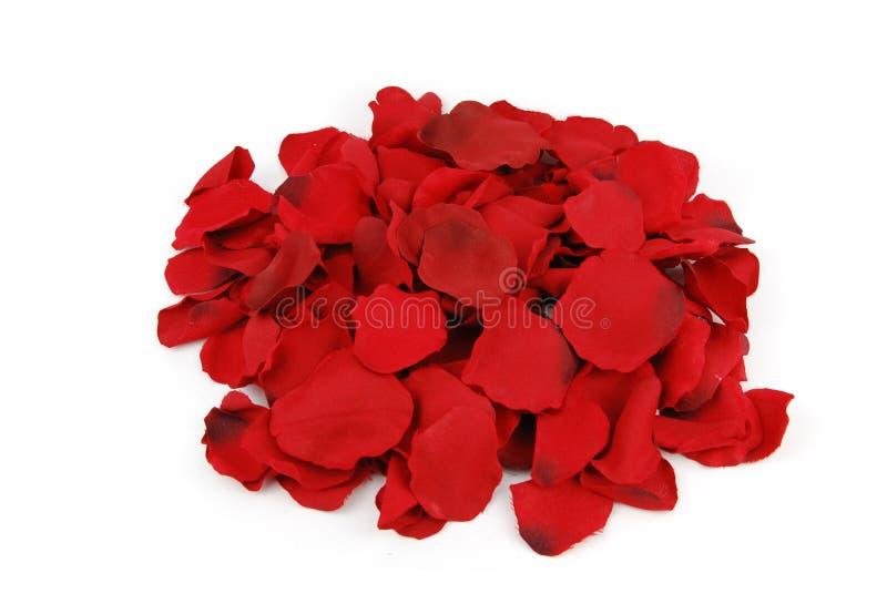 Bos van roze bloemblaadjes voor de Dag van de Valentijnskaart stock afbeeldingen