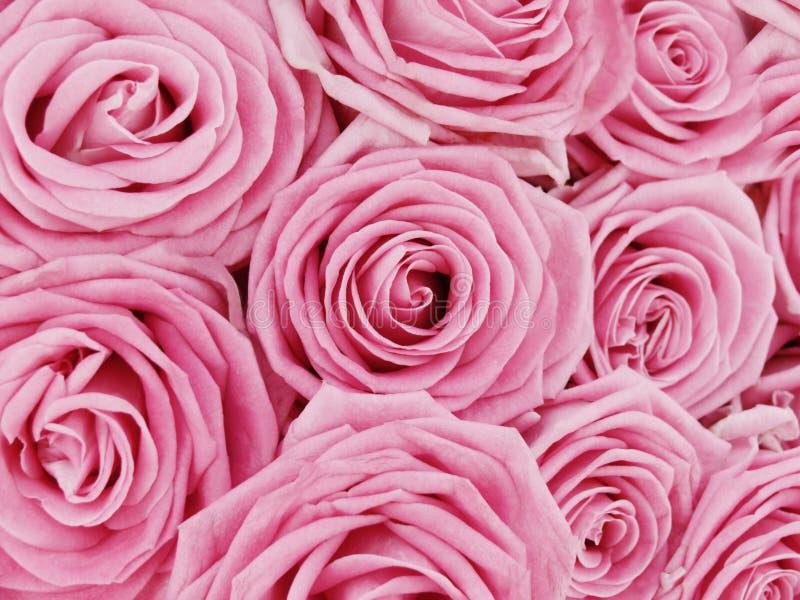 Bos van roze rozen stock foto