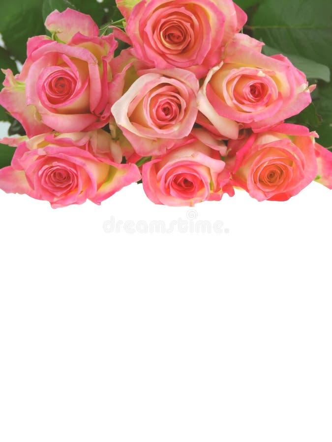 Bos van rozen. royalty-vrije stock afbeelding