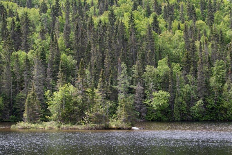 Bos van Saguenay-Gebied van Quebec Canada royalty-vrije stock afbeeldingen