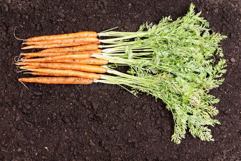 Bos van vers geplukte inlandse wortelen stock foto's