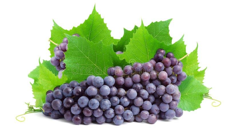Bos van verse druiven royalty-vrije stock foto's