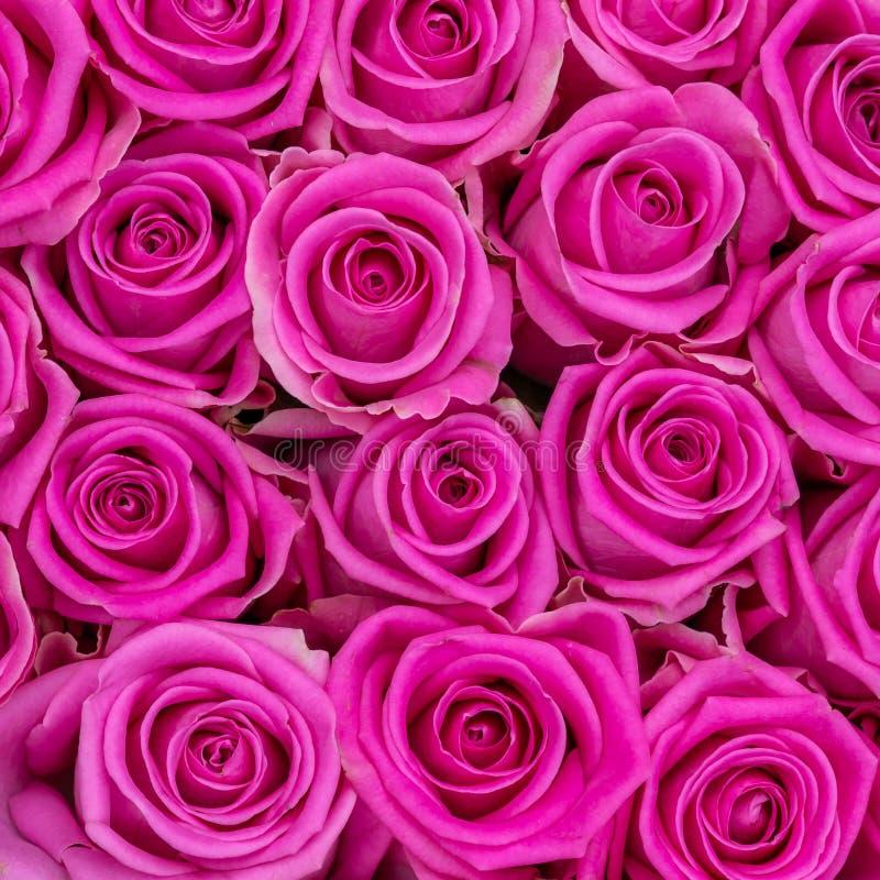 Bos van verse en kleurrijke roze rozen voor achtergrond stock fotografie