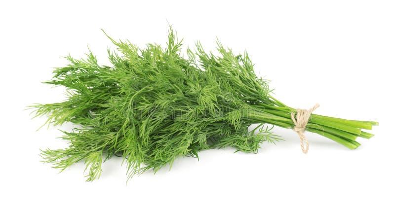 Bos van verse groene die dille op witte achtergrond wordt geïsoleerd stock foto
