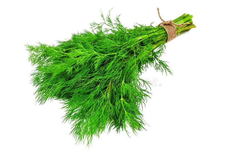 Bos van verse, groene dille op wit royalty-vrije stock foto's