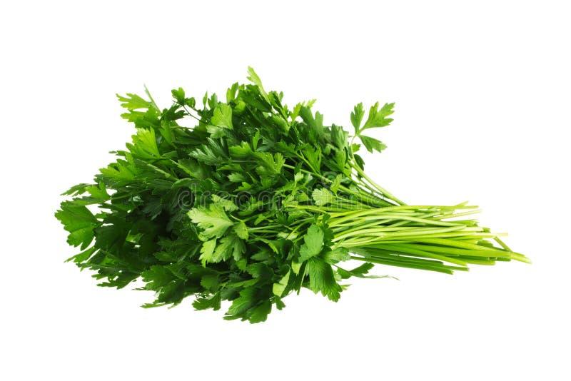 Bos van Verse groene peterselie Geïsoleerdj op witte achtergrond royalty-vrije stock foto