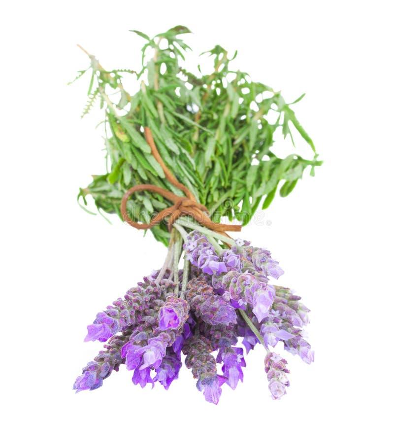 Bos van verse lavendel stock fotografie