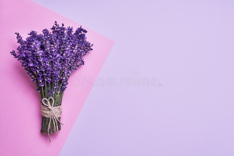 Bos van verse lavendel op roze achtergrond Violette bloemen Het begroeten van bloemenkaart met plaats voor tekst Hoogste mening,  stock fotografie