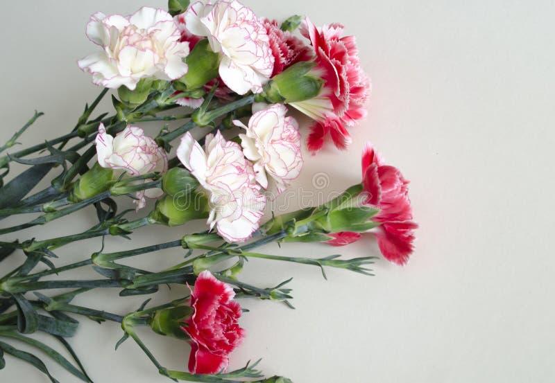 Bos van verse roze anjers op een licht tafelkleed Horizontaal formaat Bloemen van de besnoeiings de mooie lente De achtergrond va stock foto