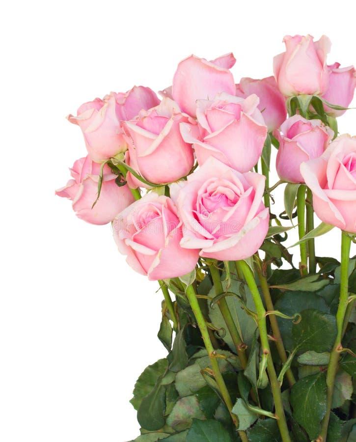 Bos van verse roze rozen royalty-vrije stock afbeelding