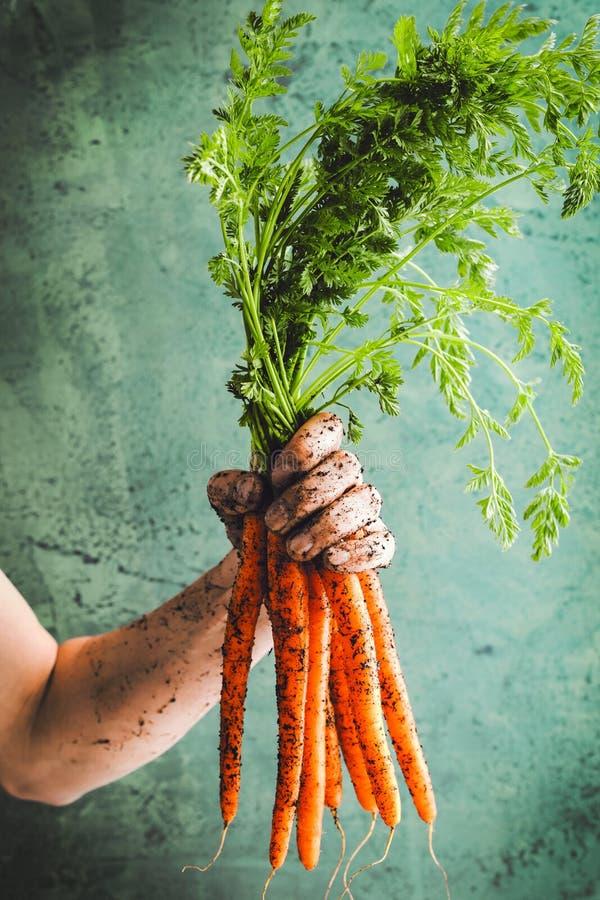 Bos van verse wortelen met groene bladeren over betonachtergrond plantaardig Voedsel royalty-vrije stock foto's