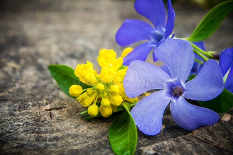 Bos van violette en gele bloemen met groen blad stock foto