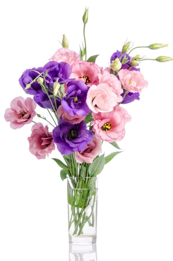 Bos van violette, witte en roze eustomabloemen in glasvaas stock foto's
