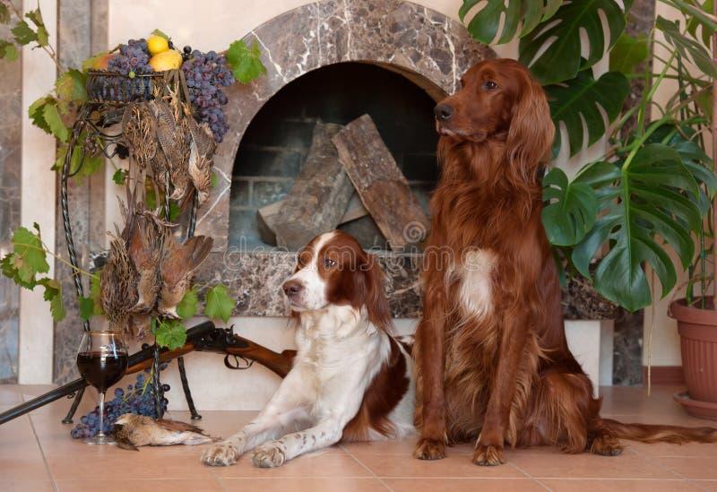 Bos van vogels, twee jachthonden en geweer op achtergrond van de open haard royalty-vrije stock afbeelding