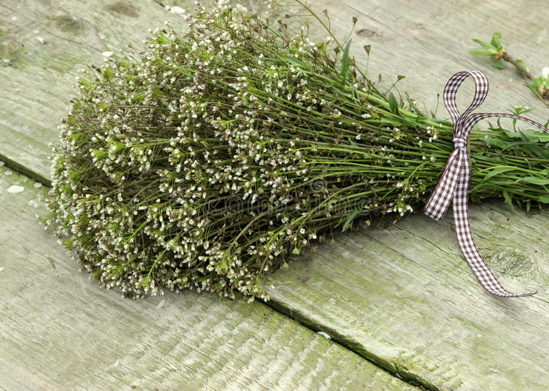 Bos van wildflowers stock afbeelding