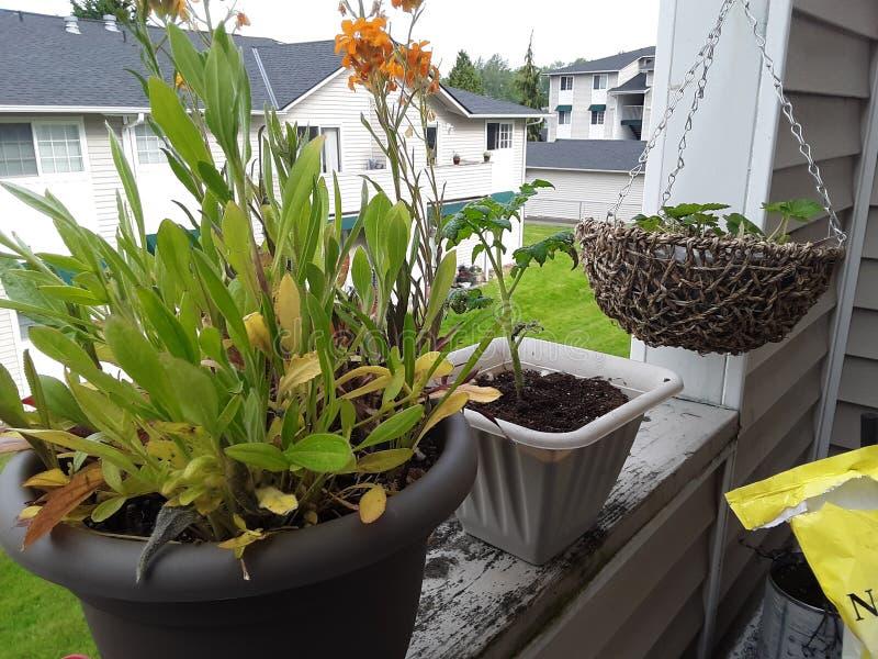Bos van Wildflowers-babyaardbeien en tomatenplant stock foto's