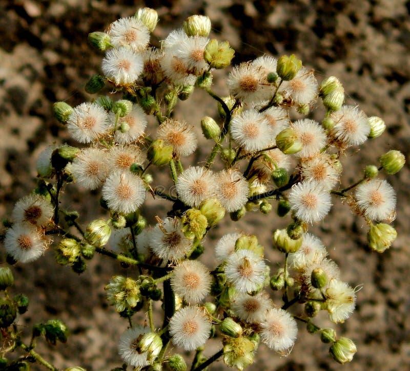 Bos van witte bloemen royalty-vrije stock afbeelding