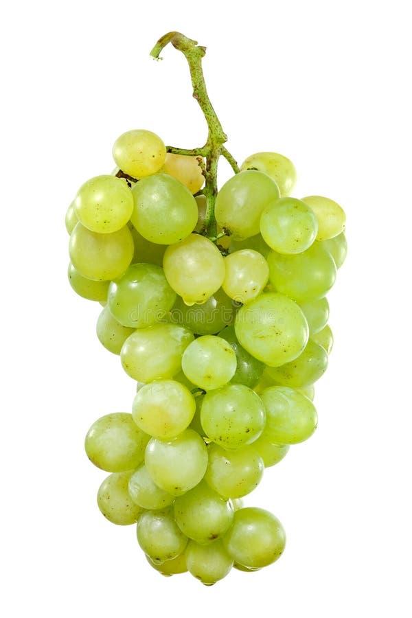 Bos van witte druiven met dalingen van water stock afbeelding