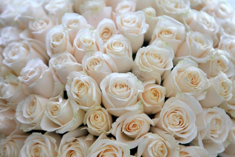 Bos van witte rozen stock afbeeldingen