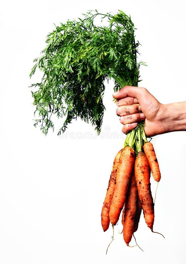 Bos van wortelen stock foto
